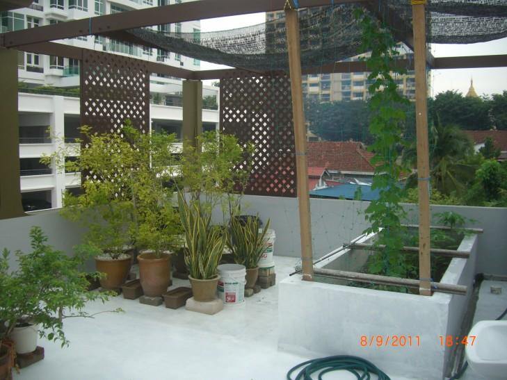 Shade Cloth Over Vegetable Garden
