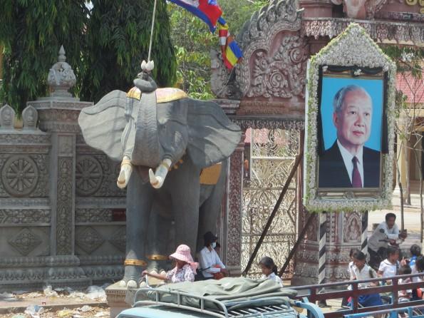 nice elephants