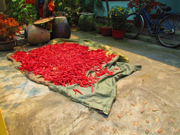 want a chilli or two?