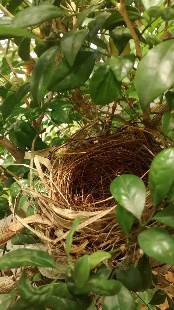 Ah...a bird nest
