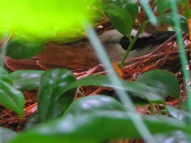 bird in residence