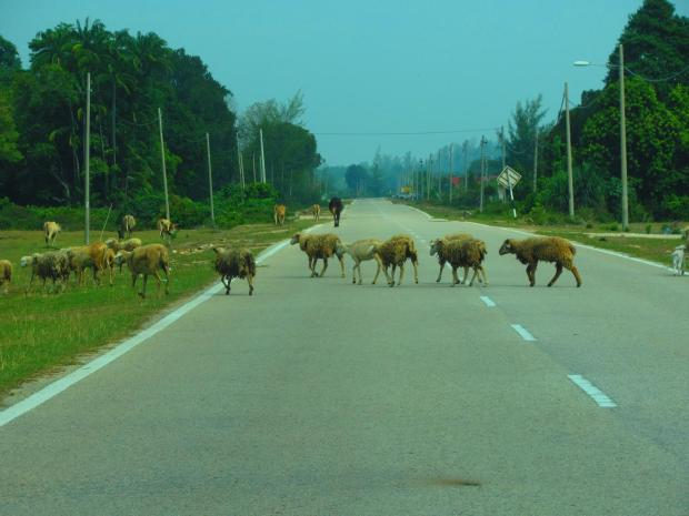 we saw quite a few farm animals - but they were sensible and didn't rush onto the road