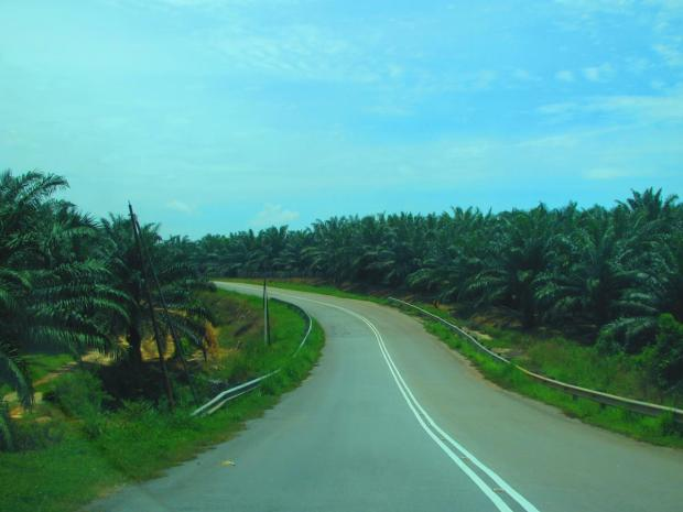 after the turnoff to the canopy walk - palm oil plantations en route