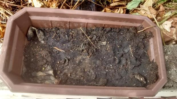 passion fruit and mung bean seeds, sown mid January