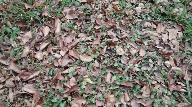 crunchy fallen leaves
