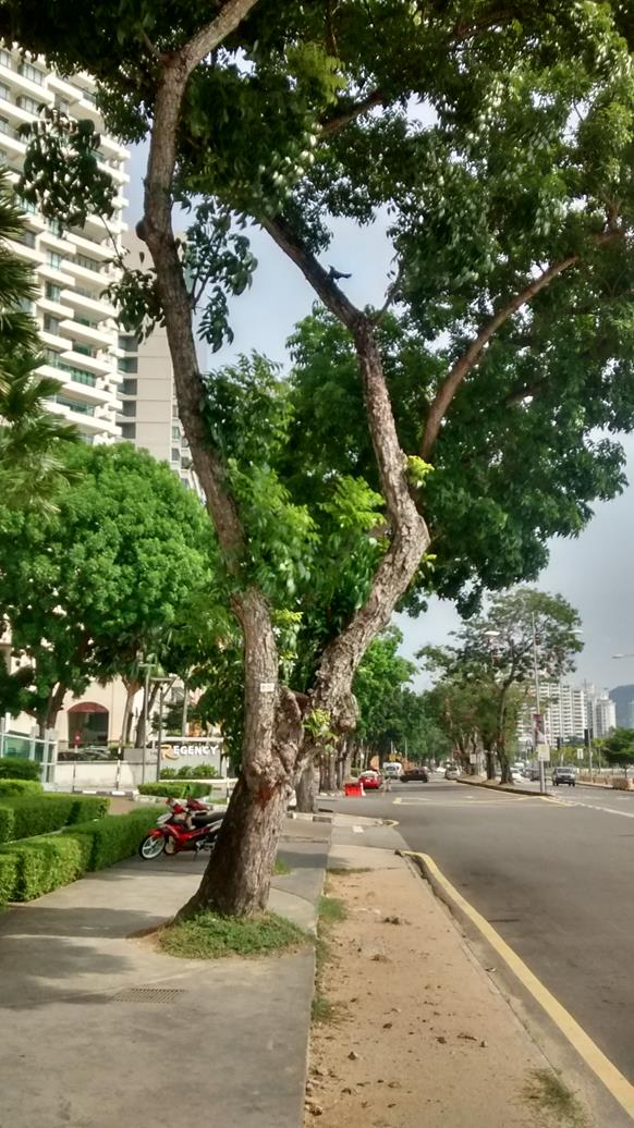 trees on Gurney Drive are numbered and labelled with their botanical names