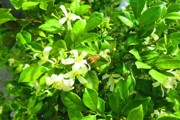 bee visiting