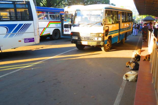 stray dogs sleeping in bus station