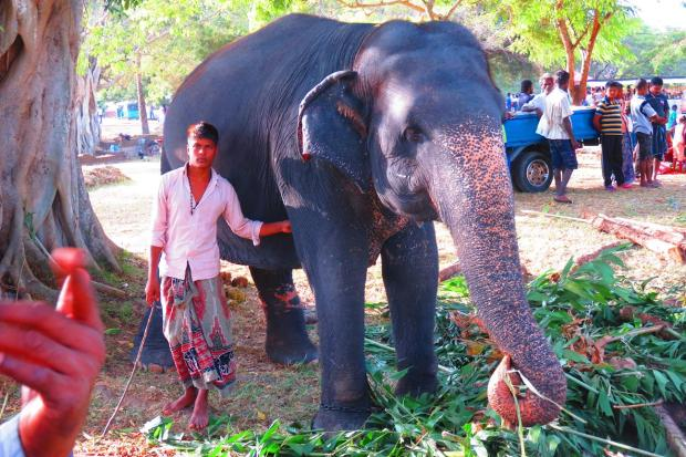 elephant in another temple area