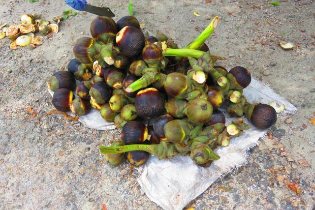 palmrya nuts