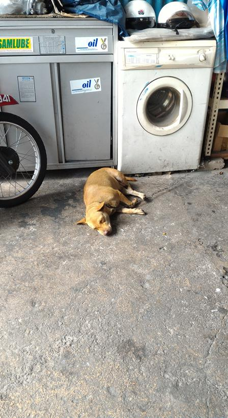 dog sleeping in workshop