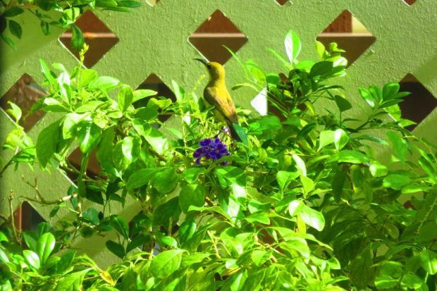 20161122_hummingbird-04-copy